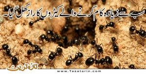 Ants are lazy in reality.