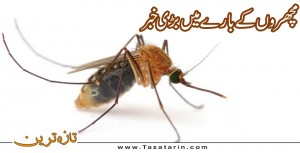 Big news about mosquitos