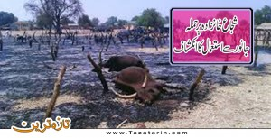 Cow was used in suicide attack on Sujah Khanzada