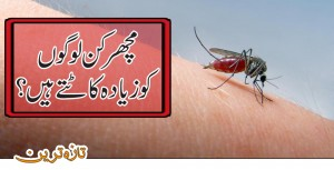 What kind of people are mostly attacked by mosquitoes