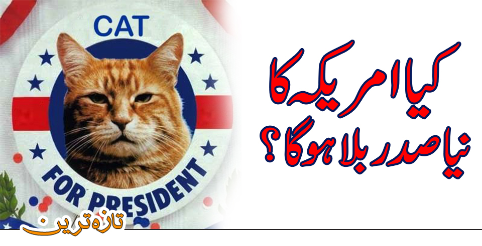 Will cat be the new president of America