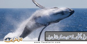 Whale put everyone in difficulty.