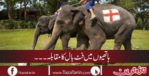 Football match between elephants