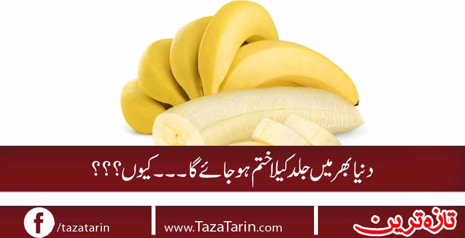 Soon Bananas to be Extinct